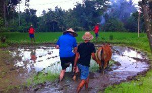 Desa wisata Bindu