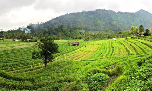Wisata alam Cepik di Sidemen Karangasem