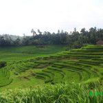 Desa Belimbing di Pupuan