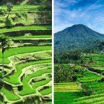 Sawah Berundak – Terasering di Bali