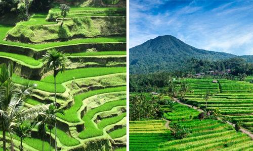 Sawah terasering di Bali