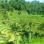 Jalan-jalan tour sehari di Ubud