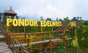 Objek wisata Pondok Edelweis Bali di Temukus