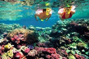 Snorkeling-di Gamat Bay Nusa Penida