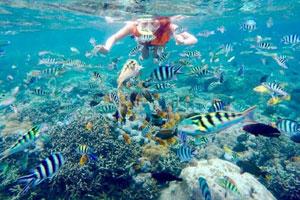 Snorkeling di Mangrove Point