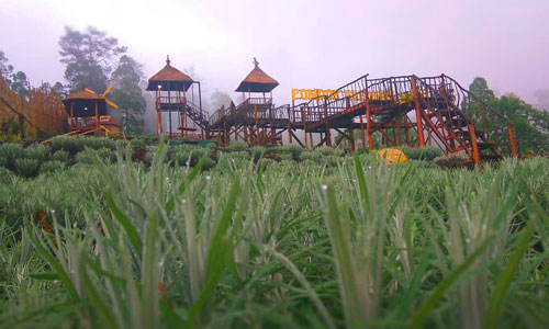 Taman Edelweis di Karangasem Bali