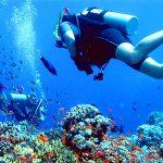 Wisata Bawah laut pulau Menjangan
