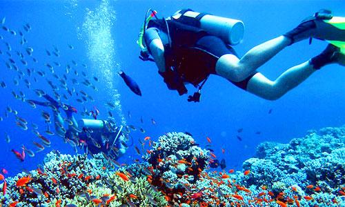 Wisata bahari diving di pulau Menjangan