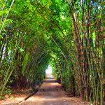 Hutan Bambu di desa Penglipuran