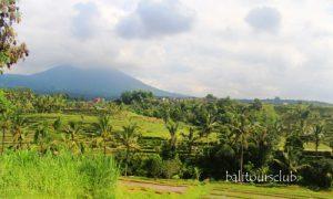 Objek wisata Jatiluwih di Tabanan