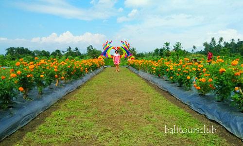 Spot selfie di Sunflower Garden Tabanan
