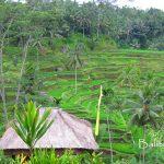 Objek wisata searah ke Ubud