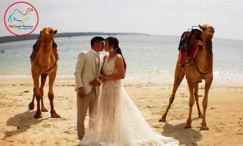 Photo Prewedding dengan Unta di Kelan Bali