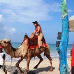 Wisata naik unta bersama Bali Camel Adventure