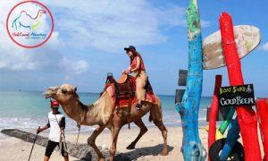 Wisata naik unta di Kelan Bali