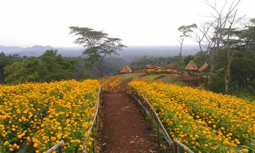 Taman Bunga Lembah Gintungan