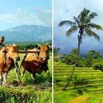 Desa wisata di Tabanan