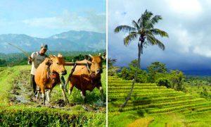 Desa wisata di Tabanan Bali