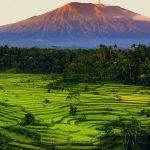 Sawah Berundak di Bali