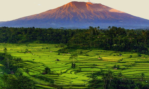 Destinasi wisata sawah berundak di Bali