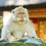 Monkey Forest – Hutan Monyet di Bali
