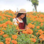 Taman Bunga di Bali
