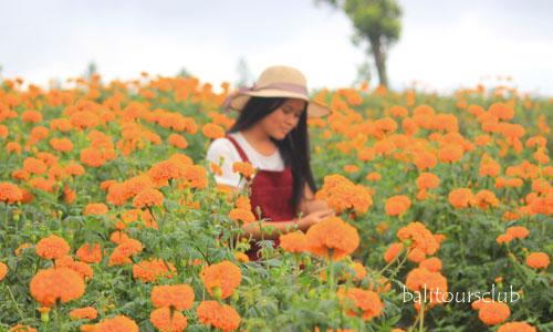 Tempat wisata taman bunga di Bali