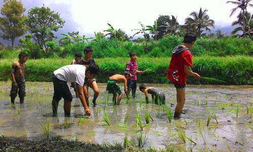 Aktivitas di desa Pinge