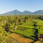 Desa Wisata Pinge di Tabanan