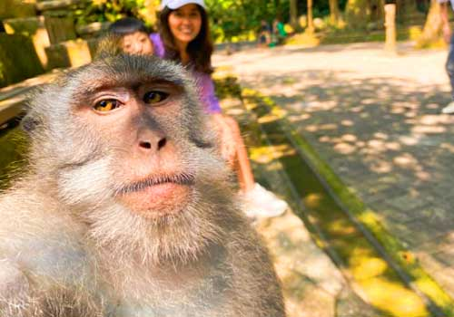 Foto selfie monyet di Monkey forest Ubud