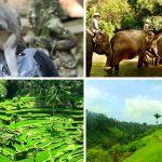 Itinerary seharian di Ubud